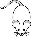 white mouse free pixabay